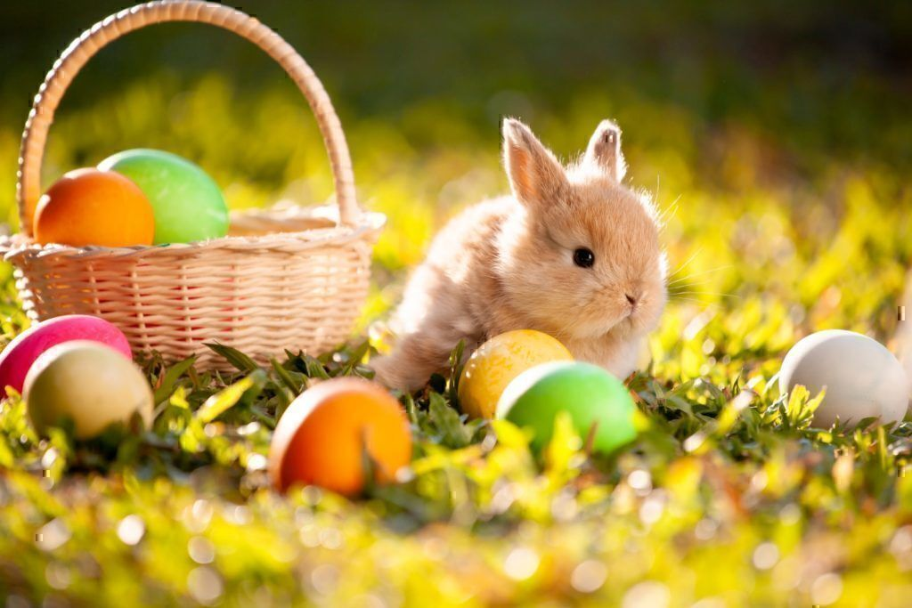 Easter 2019 shopping deals