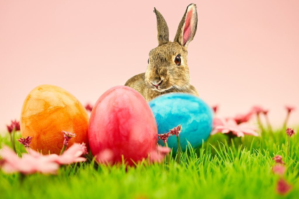 Top Easter Shopping and Celebration Tips in 2019